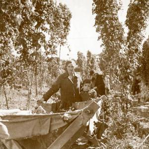 CJS013 Hop picking, c.1930s.jpg