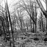Ince Blundell Woods