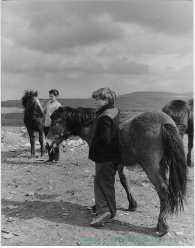 697 - Two boys, three ponies in countryside
