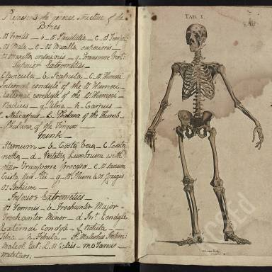 Alexander Monro Lectures on Anatomy and Surgery, 1801-1802