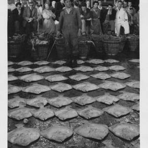 481 - Auctioneer with flat fish laid out in front of him