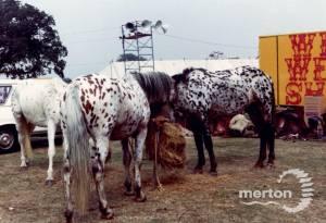 Ponies at the Merton Show, Morden Park