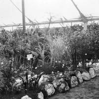 Display at the Southport Flower Show in 1936