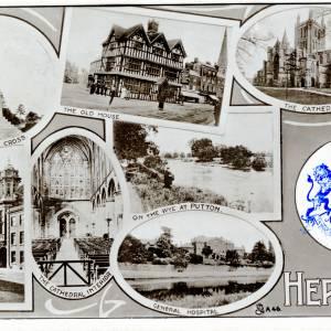 300 Hereford.jpg