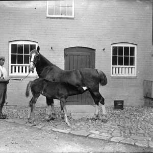 G36-047-01 Horse foal suckling with  man.jpg