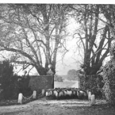 "1900 ""Trespassers"" Sheep at the Gates of Houghton Hall"