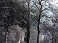Wimbledon Common: Lovers Walk