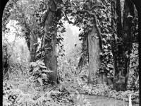 Dr.Clarke's garden, Mitcham