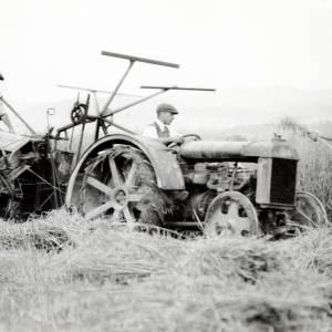 Harvesting in Mathon, c1934