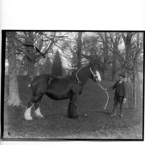 G36-331-12 Man holding the halter on a large black stallion, who wears a straw plait on his mane and a straw tuft on his tail.jpg