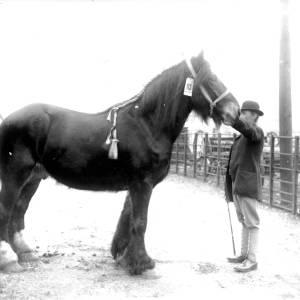 G36-318-10 Heavy horse with groom.jpg