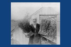 Mitcham lavender grower, Henry Fowler