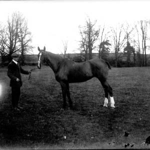 G36-540-16 Horse with handler in field.jpg
