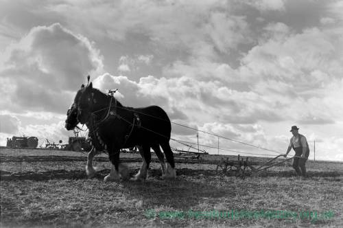 H Samuel the only entrant of a ploughing match, Hoarwithy, October 1958