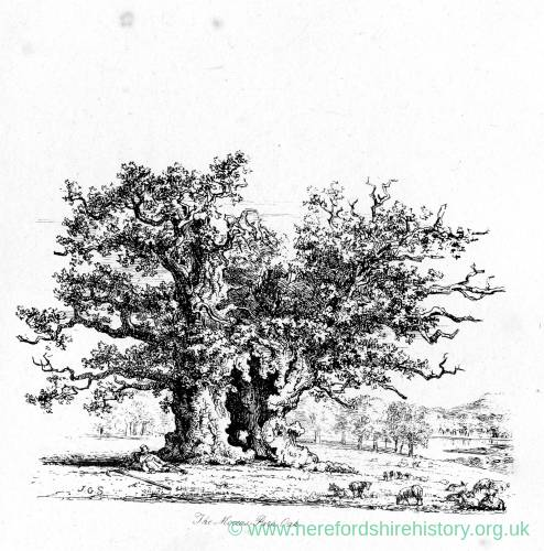 The Oak, Moccas Park, Herefordshire, print