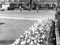 Fair Green, Mitcham: Gardens and shops