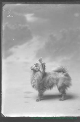 G36-281-10 Portrait of small dog.jpg