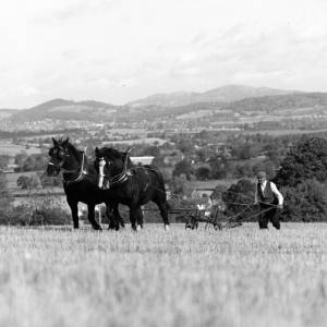 Ploughing with horses, possibly Malvern hills in the background