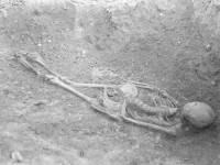 Skeleton from cemetery near Morden Road, Mitcham