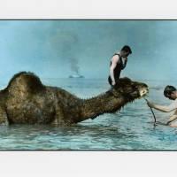 sea, camel