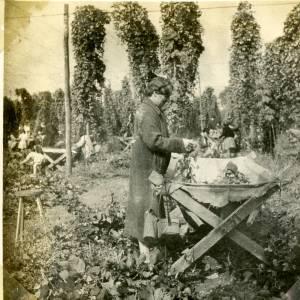CJS023 Hop picking, c.1930s.jpg