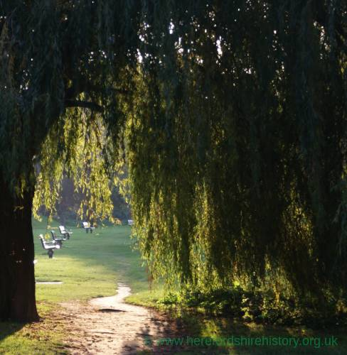 Willows by River Wye, Ross.jpg