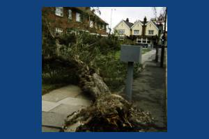 Manor Road, Mitcham: Storm Damage