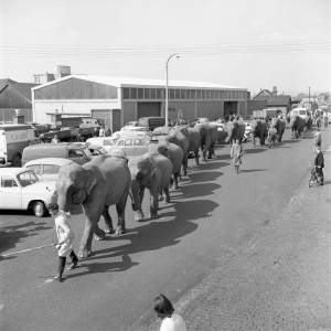 Elephants from Billy Smart's Circus, 1962
