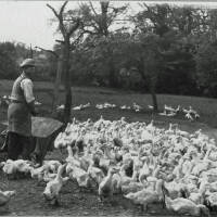 Dell Farm