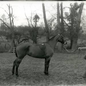 G36-218-13 Horse & handler in field, handler wears suit & soft cap.jpg