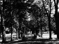 Morden Hall Park: Avenue of lime trees,looking east