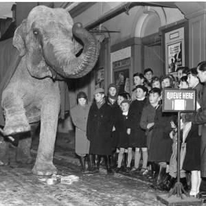 An elephant performs tricks outside the County Theatre, Hereford