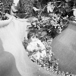 Baby and lots of Hops in a Hop Crib, Withington, Herefordshire, 1968