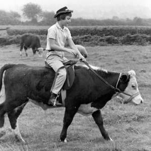Penny Powell riding a cow