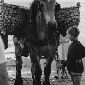 042 - Boy holding horse with basket panniers