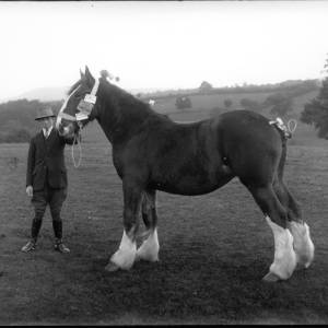 G36-242-04 Young man with heavy horse displaying first prize award.jpg