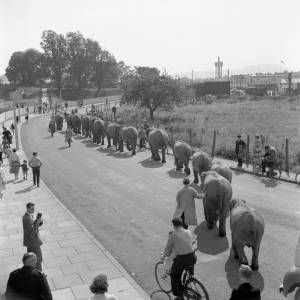 The Elephants of Billy Smart's Circus 1962