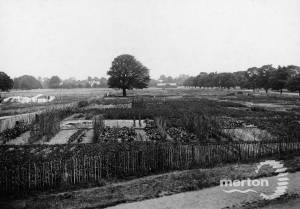 Allotments on Wimbledon Common.