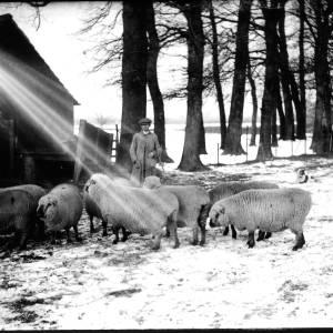 G36-328-08 Shepherd with sheep in snowy field.jpg