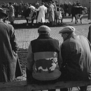 444 - Bull sale at Hereford Cattle Market, man with bull cardigan on bench