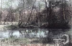 Wimbledon Common: Birch Pond