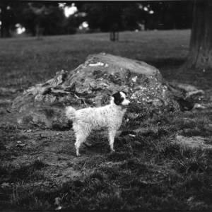 G36-054-04 Dog.jpg