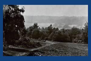 Wimbledon Common: Picnic Spot