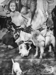 Some of Mrs J. Kiddels' pets