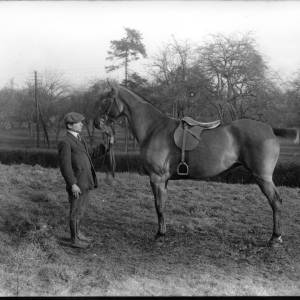 G36-241-13 Man displaying horse with orchard in background.jpg