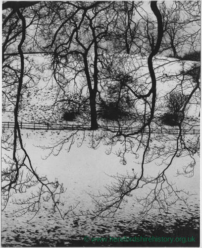 105 - Trees in snow