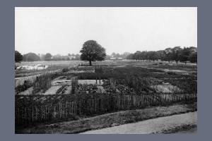 Allotments on Wimbledon Common