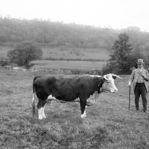 G36-290-05 Man standing by cow in field.jpg