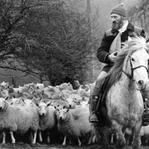 Shepherd on horseback