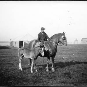 G36-042-01 Man on horse with foal at showground.jpg